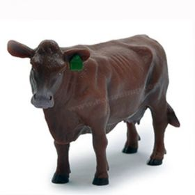 1/16 Cow Red Angus Cow