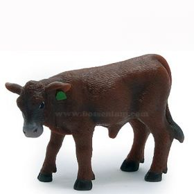 1/16 Cow Red Angus Calf